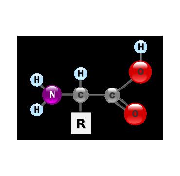 Aminokiseline