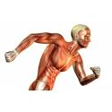 Mišići i zglobovi