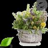Herba Croatica – snaga vitalnosti u esenciji mediterana